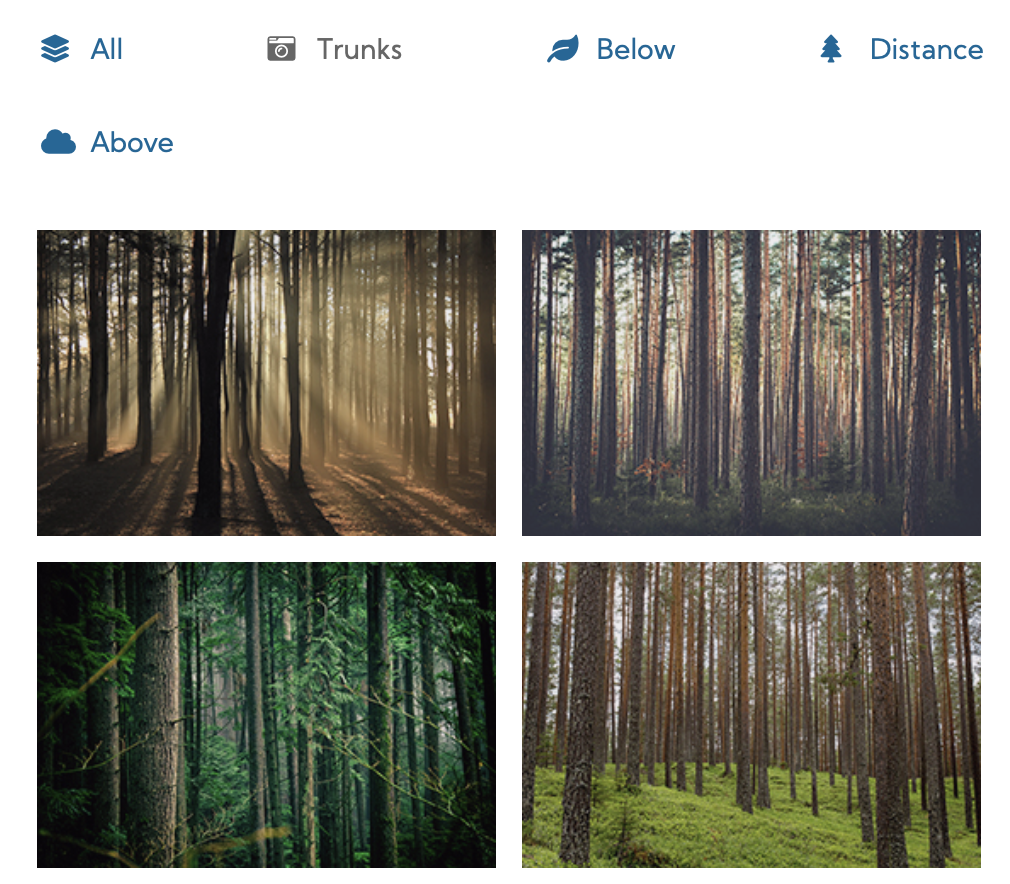 A gallery, filtered to trunks, shows four pictures of tree trunks in various settings.